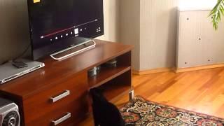 Кошка любит фильмы про кошек, собак и животных