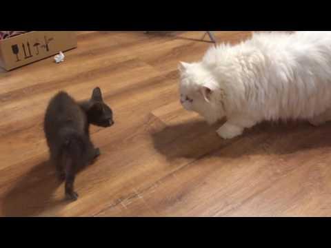 знакомства и кот
