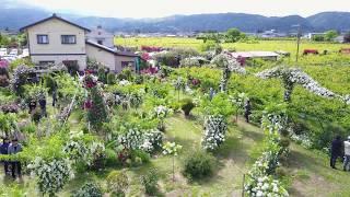 空撮 2017 佐藤梨園 ローズガーデン 6月4日 福島市
