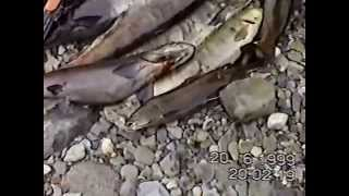 Рыбалка на правых притоках Нижней Тунгуски(, 2014-07-29T17:52:11.000Z)