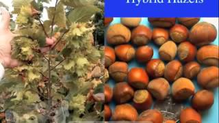 Permaculture 2015 Introduction to Woody Agriculture 2011 Woody Ag Short Course