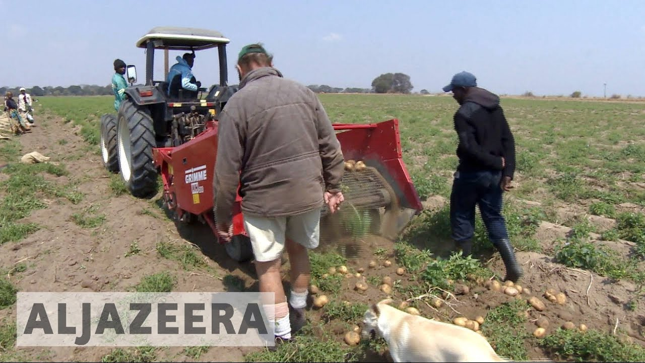 White farmers thrive in Zambia years after driven from Zimbabwe
