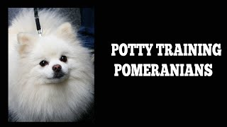 How To Easily Potty Train Pomeranians