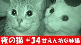 茶トラ猫の「ちゃい」と、サバトラ猫の「すし」の様子をナイトモード(...