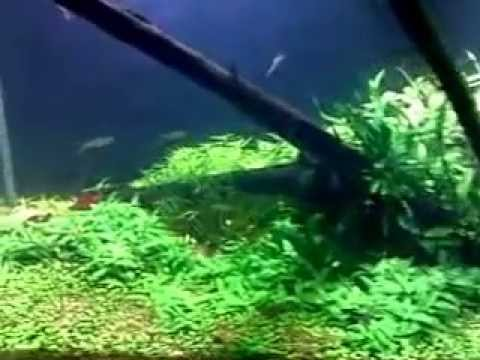 3ft Fish Tank ~Dutch Style Aquascape With DIY Substrate