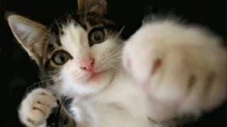 Приколы. Коты боксеры