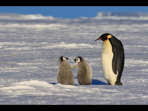 皇帝ペンギンの営巣地と南極点へ...