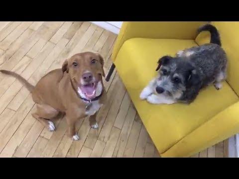 LIVE: Rescue Dog Best Friends Reunited in 2018 | The Dodo Live