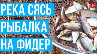 Первая весенняя рыбалка на реке Сясь Ловим плотву густеру подлещика на фидер Жарим свежую рыбу