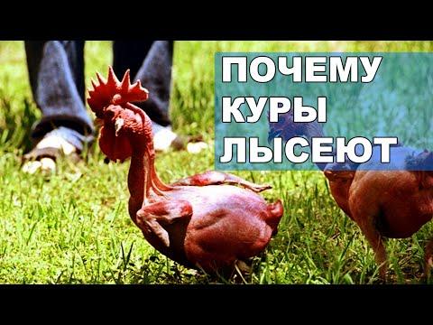 Вопрос: Почему у птиц не все тело покрыто перьями?