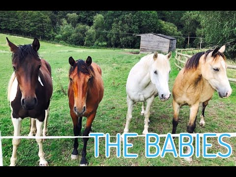 MEET MY HORSES ~ The Babies, Part 3/3
