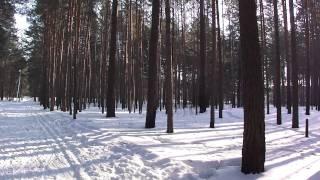 Siberian forest HD