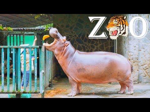 Thăm sở thú Sài Gòn 2018 (Saigon Zoo 2018) - Phần 2