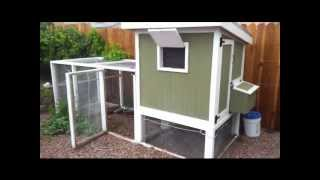 Las Vegas Backyard Chicken Coop