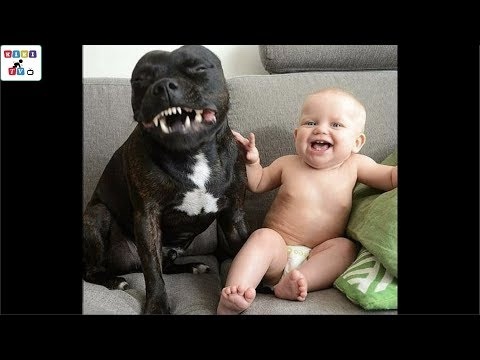 Cute dog - The dog's reaction to the baby for the first time is super fun