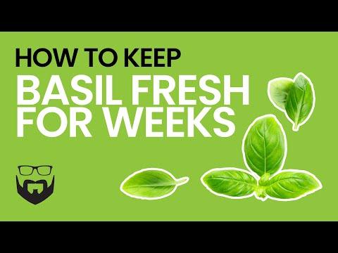 How To Keep Basil Fresh For Weeks