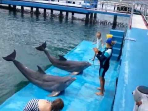 SWIMMING WITH DOLPHINS IN CUBA 2012