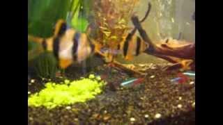 Manyak Aquarium