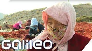 Der vermutlich schärfste Arbeitsplatz: Chili-Ernte extrem | Galileo | ProSieben