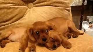 2012 年3月30日に誕生したSilvaとLolo。正式にはSilva=Silver lining♂ ...