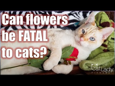 What Flowers Are TOXIC To Cats? (and Which Are Safe!) - Cat Lady Fitness