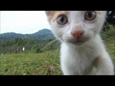 150 seconds of kitten cuteness