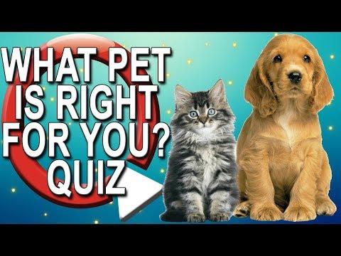 What Pet Should I Get? Take A Quiz