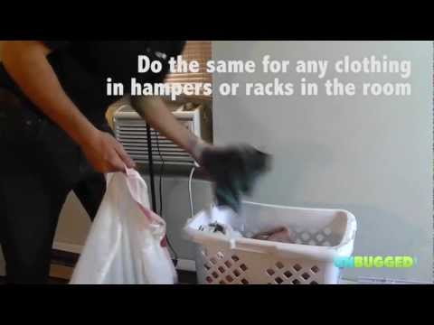 How to get rid of bed bugs in your laundry