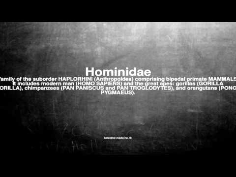 Medical vocabulary: What does Hominidae mean
