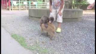 Baby Monkey (Going Backwards On A Pig) - Parry Gripp