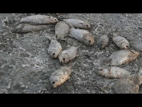 شاهد: الجفاف يتسبب بنفوق عشرات الآلاف من الأسماك في بحيرة باليونان…  - نشر قبل 3 ساعة
