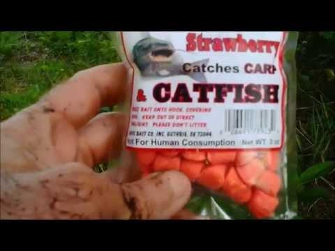 Strawberry chicken bait
