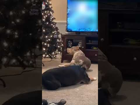 Dogga take its property from tree!!!