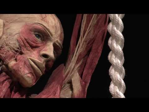 Opening BODY WORLDS: The Happiness Project in Amsterdam