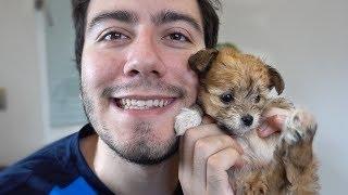 Ben Enes Batur , Yeni köpek i tanıttım , yeni köpeğim NDNG ailesini...