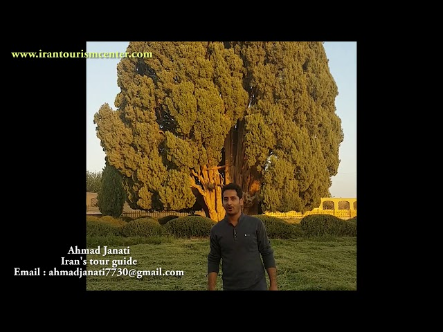 OLDEST CREATURE IN THE WORLD -SARV E ABARKOOH -AHMAD JANATI irantourismcentr احمد جنتی سرو ابرکوه