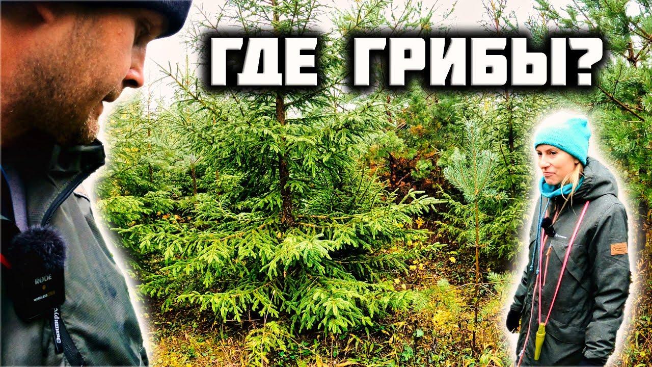 Едем за грибами в лес. Где растут рыжики.