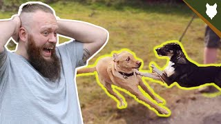 MY DOG GETS ATTACKED! Stopping Dog Aggression In One Session?!