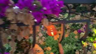 Guirlande Guinguette extérieure et Noël 8-24 m à raccorder 20 - 60 lampes multicolores LED blanc chaud vidéo