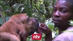 Bluthunde jagen Rebellen im Kongo | n-tv