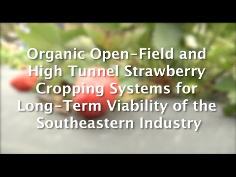 Sustainable Strawberry Production Research Project