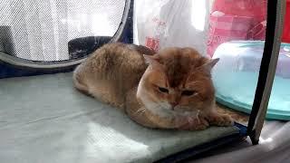 Выставка кошек в Николаеве 2-3 марта