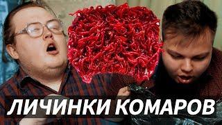 МОТЫЛЬ / ЛИЧИНКИ КОМАРОВ