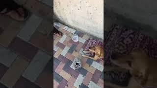 женщина хозйка изможденной собаки на Ставрополье