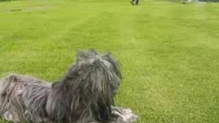 アニー初めての散歩 初めての芝生 初めてのノーリード.