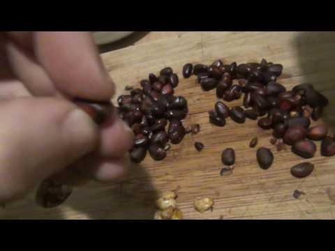 Как почистить кедровый орех от скорлупы в домашних условиях
