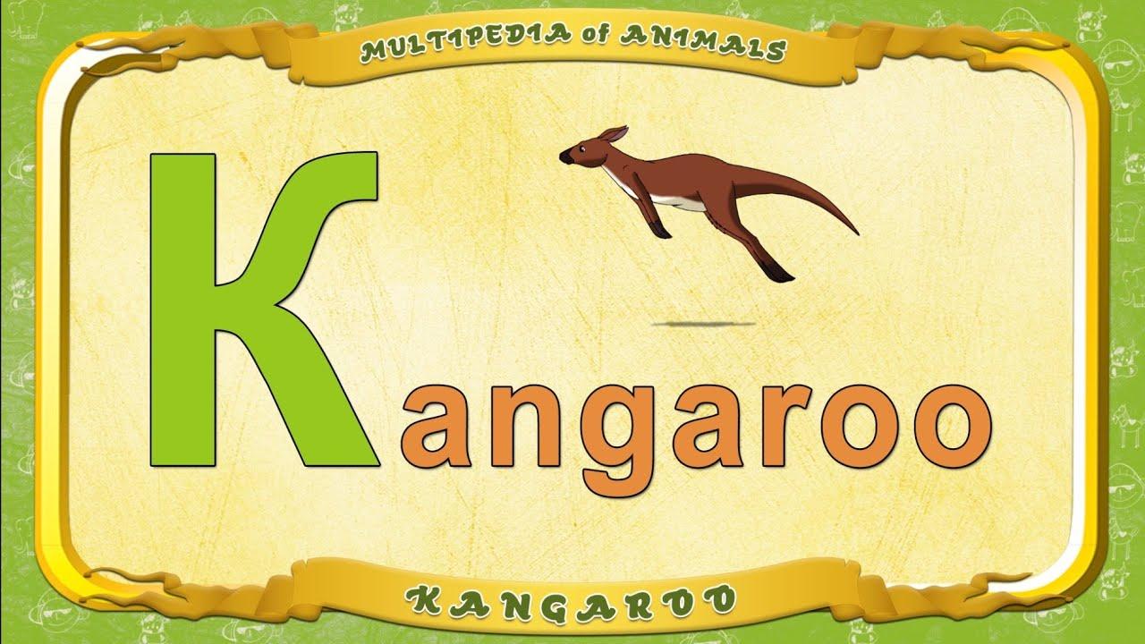 multipedia of animals  letter k - kangaroo