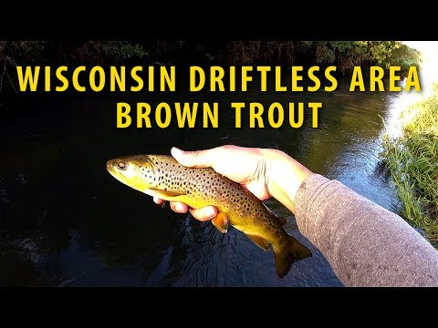 Fly Fishing for Trout in the Wisconsin Driftless Area September 2017