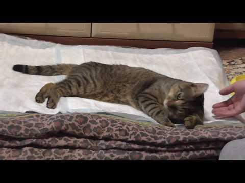 Как отходят коты от наркоза