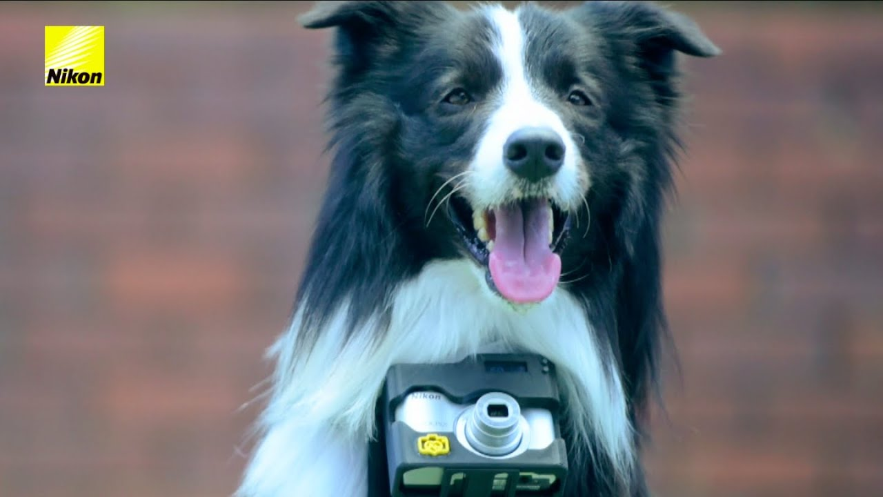 Šuo su širdies plakimo dažniu valdomu fotoaparatu